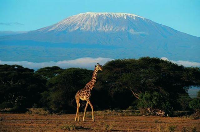 Kilimanjaro with Mountain Madness